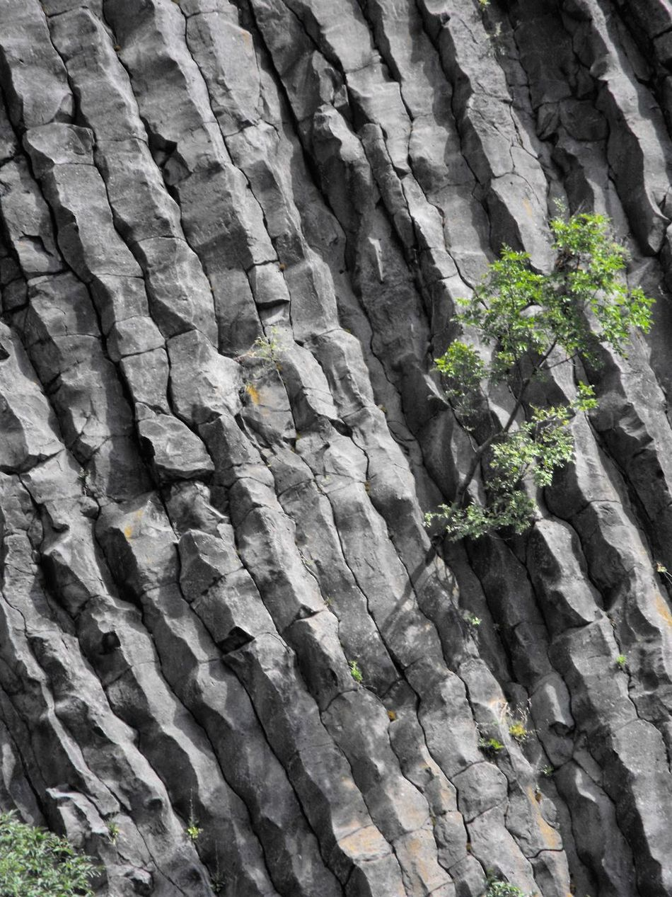 Backgrounds Cliff Close-up Day Forms And Shapes Full Frame Geological Geology Growing Growth Hegyestű Holiday Life Low Angle View Mountain Nature No People Outdoors Plant Rock - Object Rock Face Textured  Textures And Surfaces Tree Trip Photo