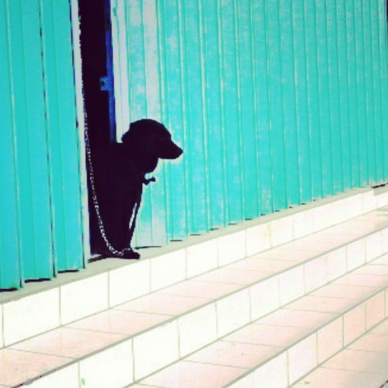 guard Dog Dailypictures Streetphotography Shape Lines Igers Instanesia Sunday Weekproject Instafamous Instanusantarabali IGDaily Instacolor Ighub Instahub Instadaily Instanusantara Instapop Falsecolor Instafalsecolor Bali INDONESIA LangitbaliPhotoworks