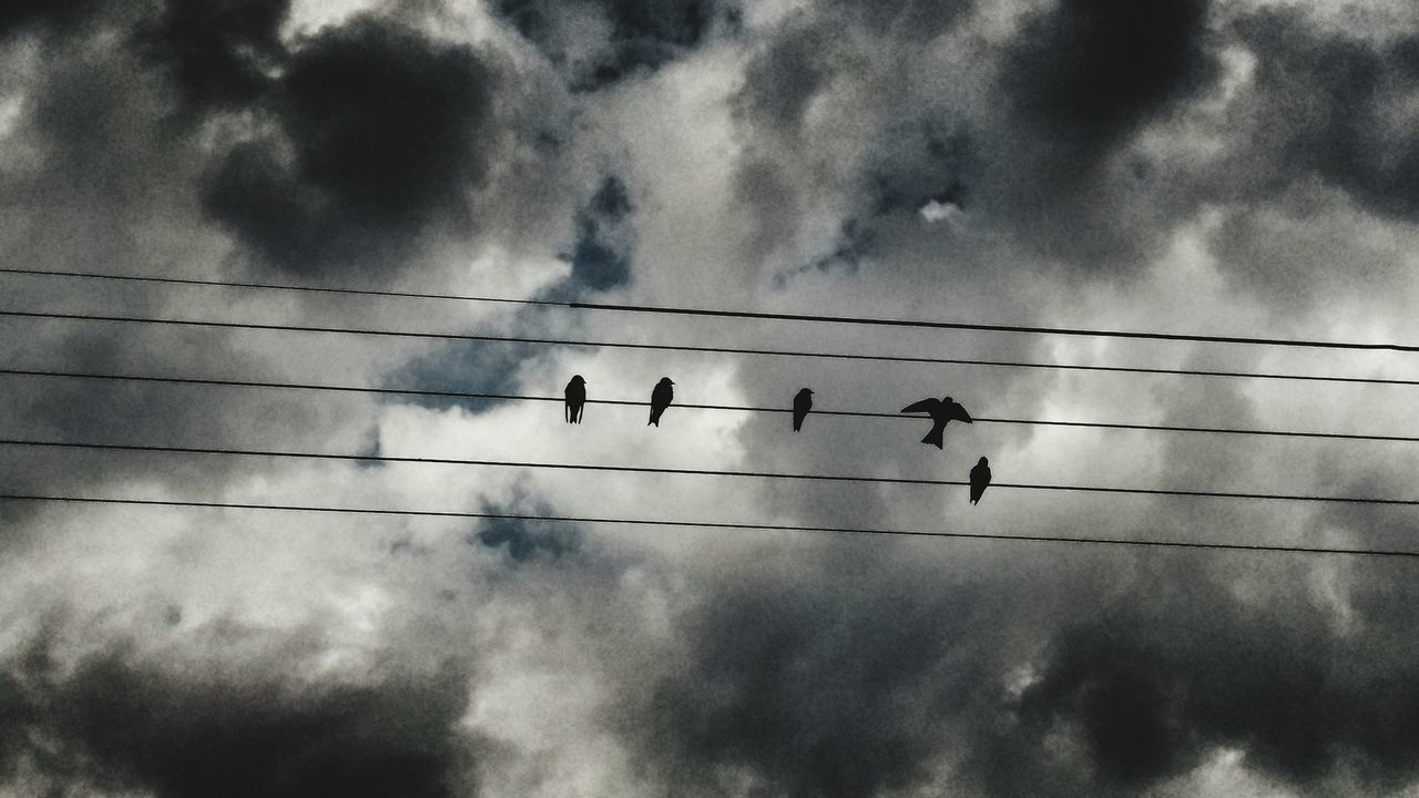 Cable Bird Animals In The Wild Power Line  Animal Themes Power Supply Animal Wildlife Connection Cloud - Sky Electricity  Flock Of Birds Large Group Of Animals Electricity Pylon Perching Silhouette Nature Telephone Line Togetherness Sky Fuel And Power Generation