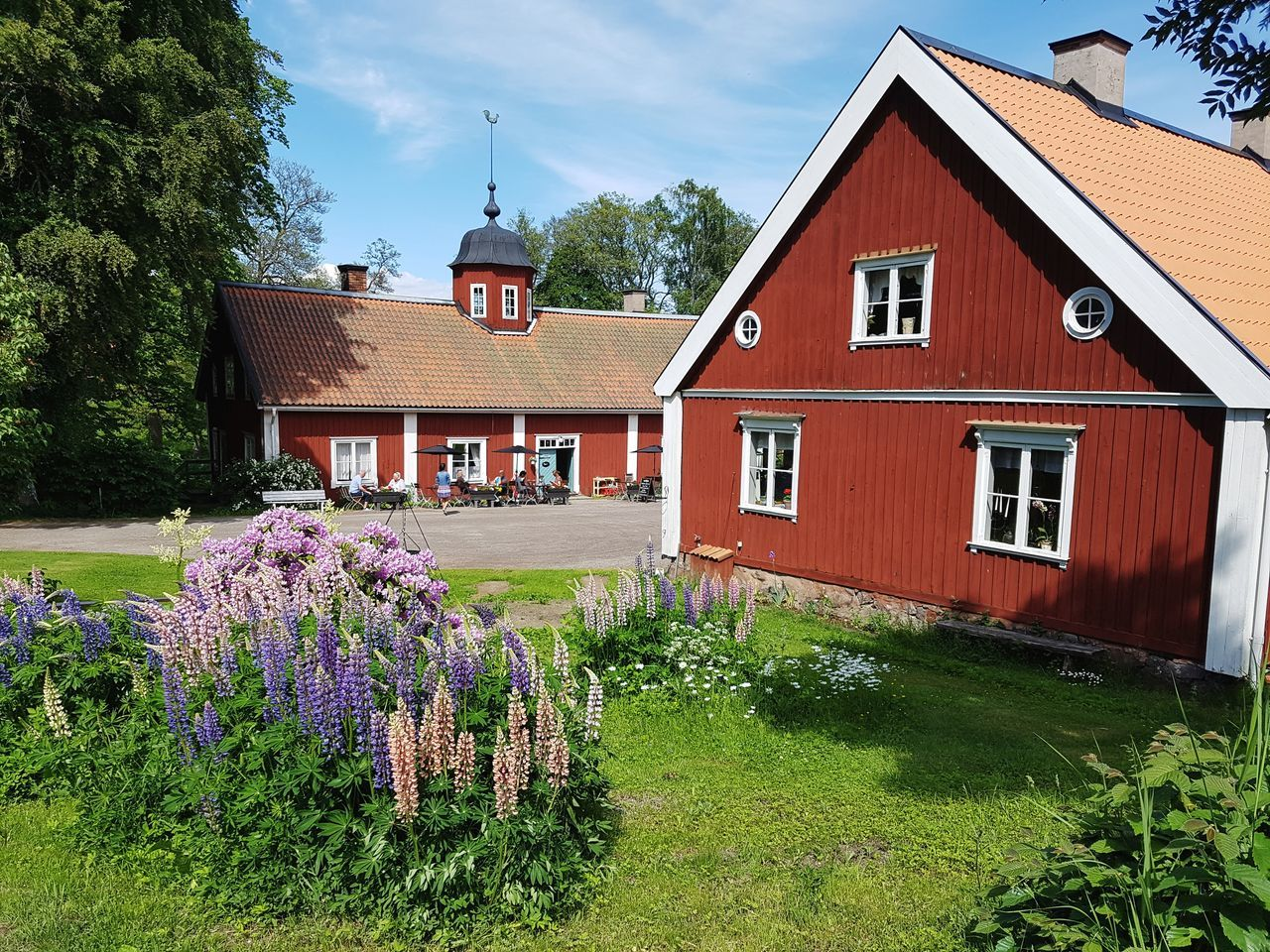Sverige Sweden Swedish Summer Lupines Red Houses Secondhome Wira Bruk Flower Grass Outdoors