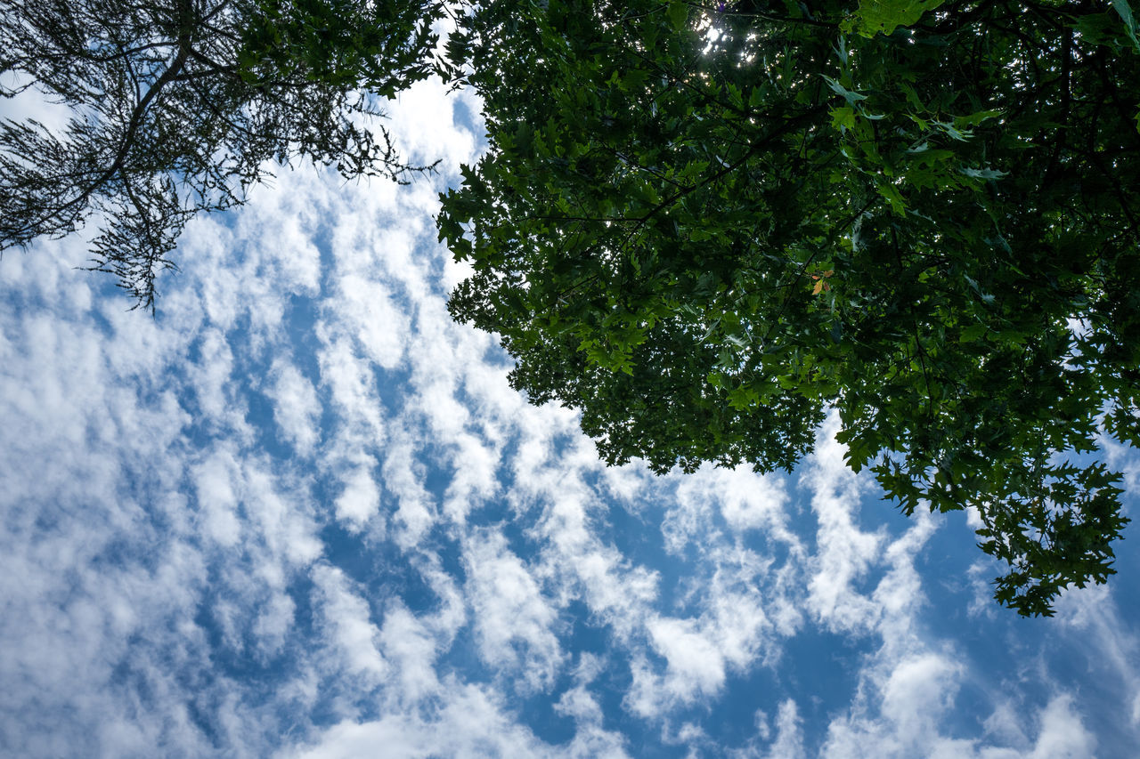 Frankfurt Grüneburgpark Backgrounds Beauty In Nature Branch Cloud - Sky Day Freshness Growth Grüneburgpark Low Angle View Nature No People Outdoors Park Scenics Sky Sky And Clouds Tree