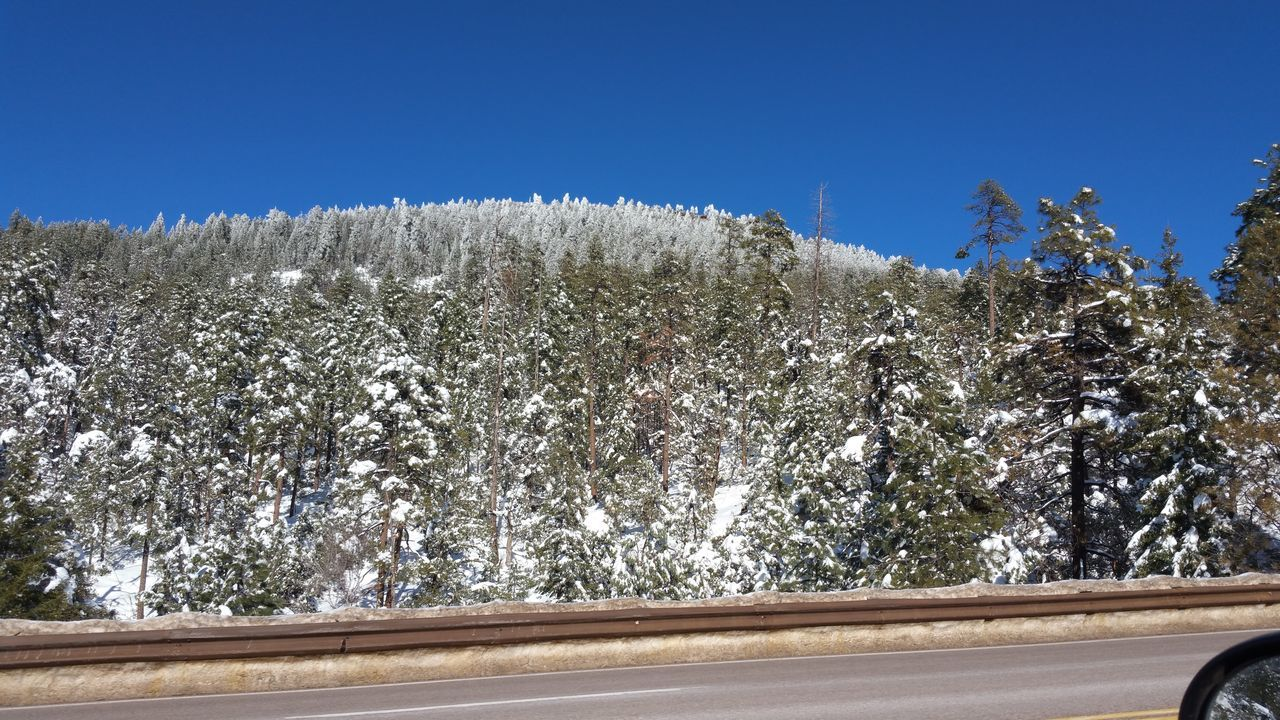 tree, nature, day, transportation, growth, no people, plant, clear sky, outdoors, road, beauty in nature, snow, sky