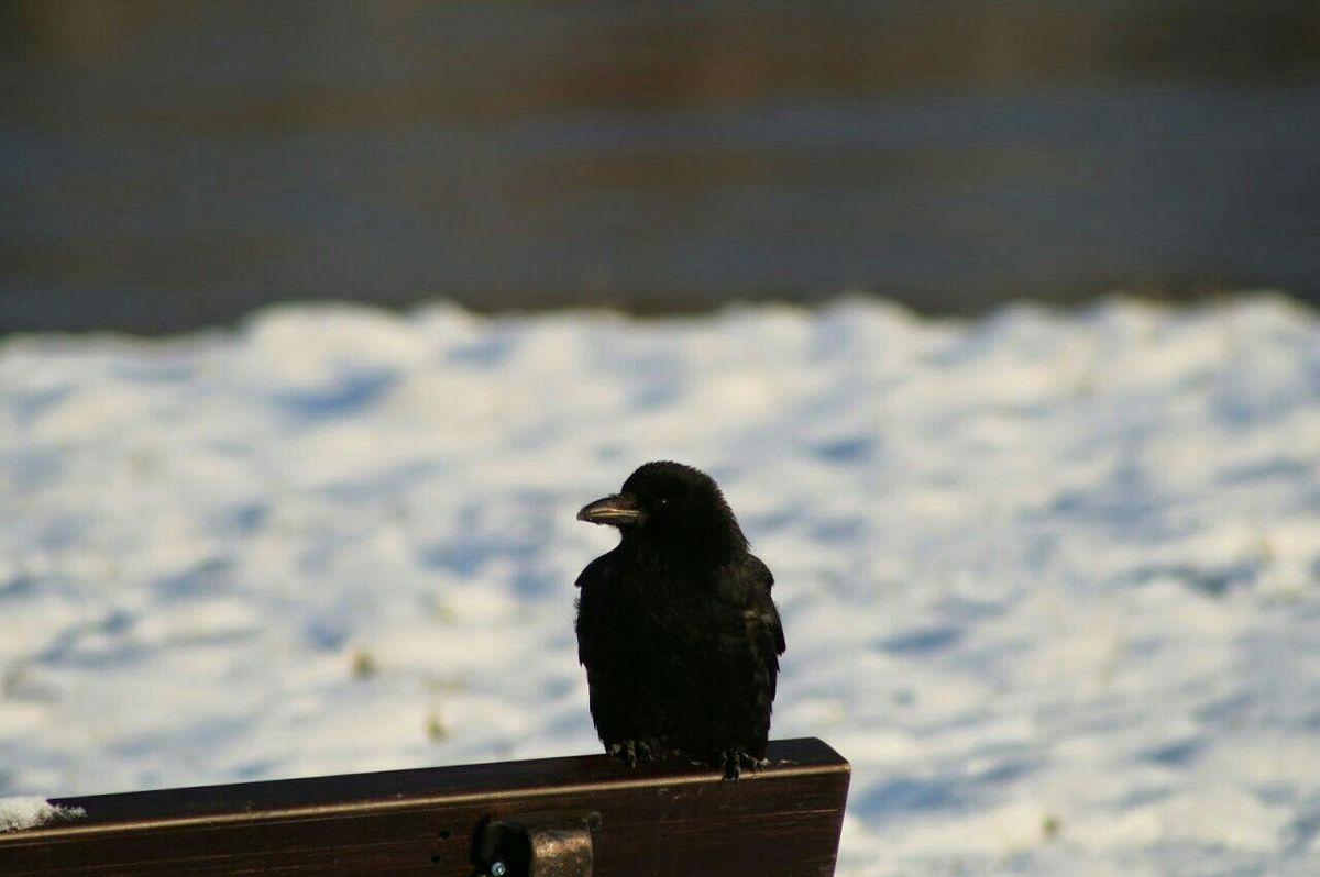 Bird Tadaa Outdoor Photography Nature Photography Picasa