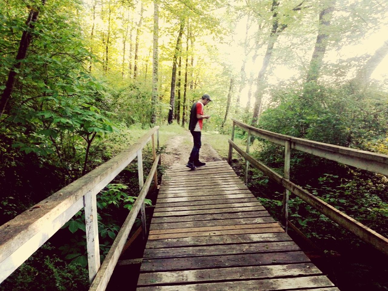 tree, forest, wood - material, nature, full length, the way forward, railing, footbridge, real people, one person, growth, tranquil scene, beauty in nature, day, outdoors, adventure, leisure activity, scenics, lifestyles, wood paneling, hiking, standing, men, adult, people