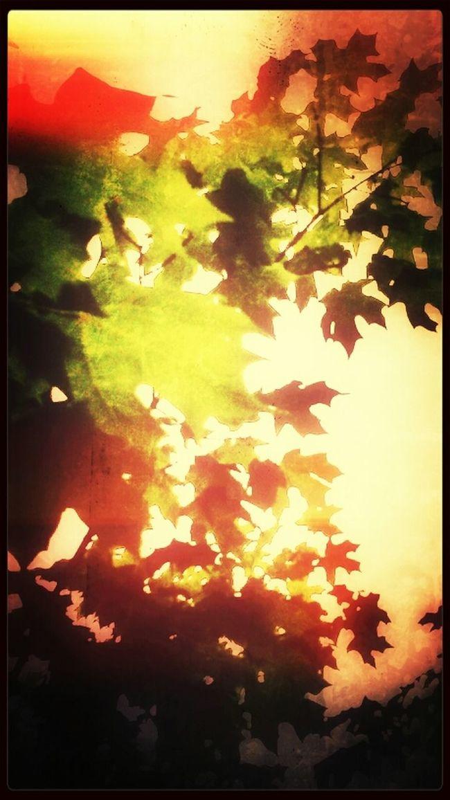 Firey Foliage. TreePorn EyeEm Best Shots - Trees Snapseed Tree_collection