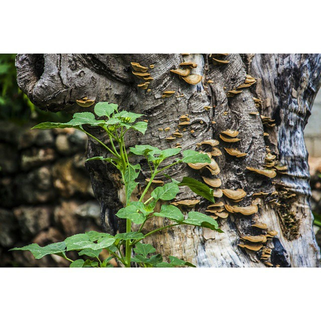 Canon 5dmarkll Natural Naturaleza árbol Arte Color Fotografo Foto Hongo Mexicomagico Mimexico Yúcatan Tdt