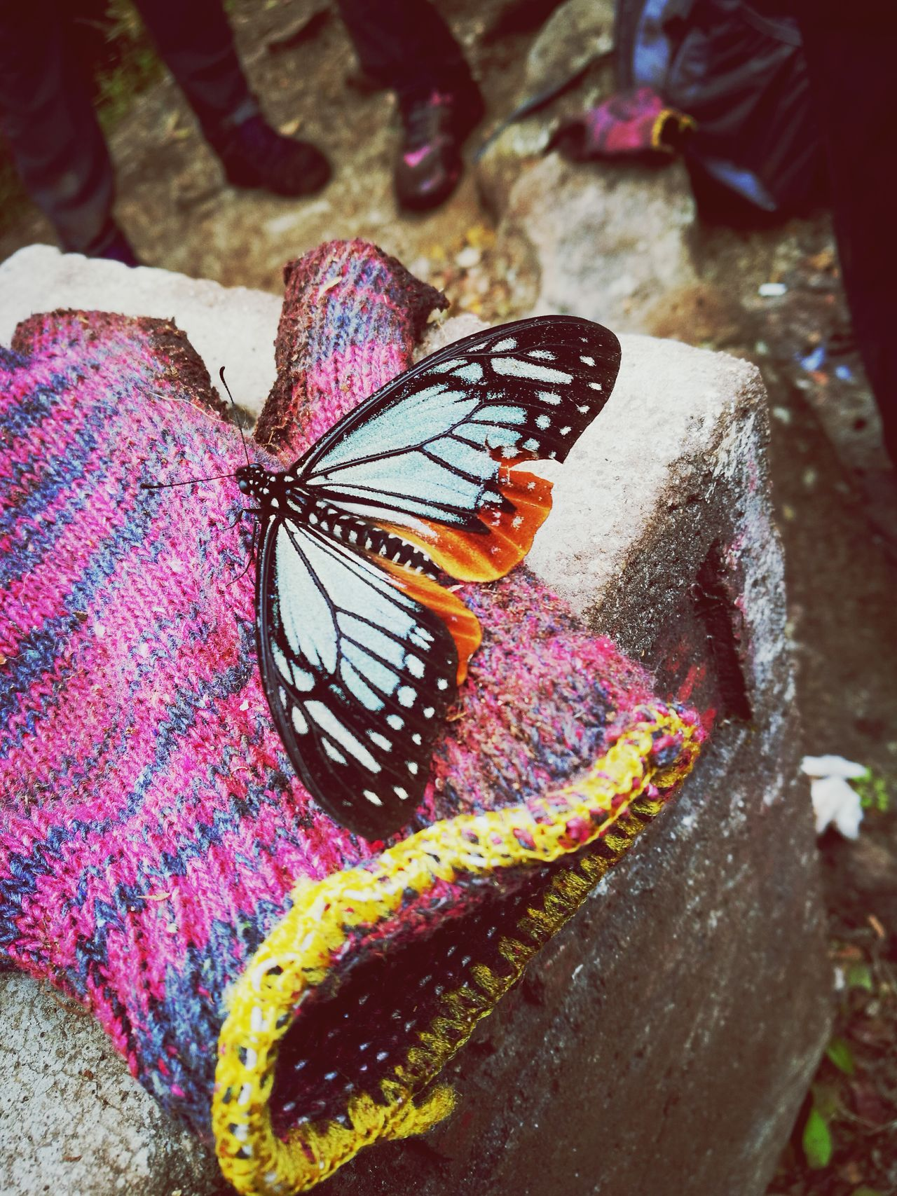 Butterfly - Insect One Animal Close-up Outdoors Multi Colored Fabric Insect