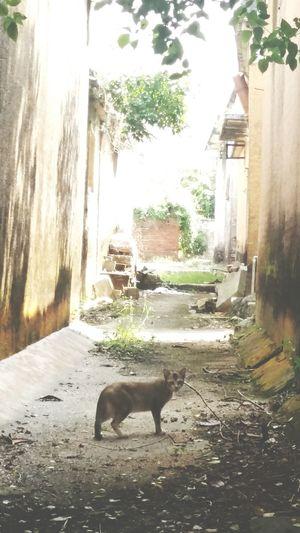 Animal Themes Cat Domestic Animals Nature Tree Yellow Wall Plants Road Old Village - Zhuhai China