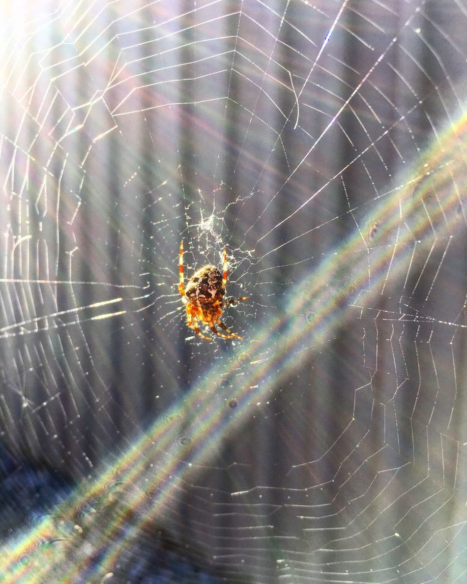 Spider Web Spider Animals In The Wild Close-up Fragility Web Beauty In Nature Insect One Animal Animal Themes Nature No People Outdoors Day Animal Wildlife Therapy