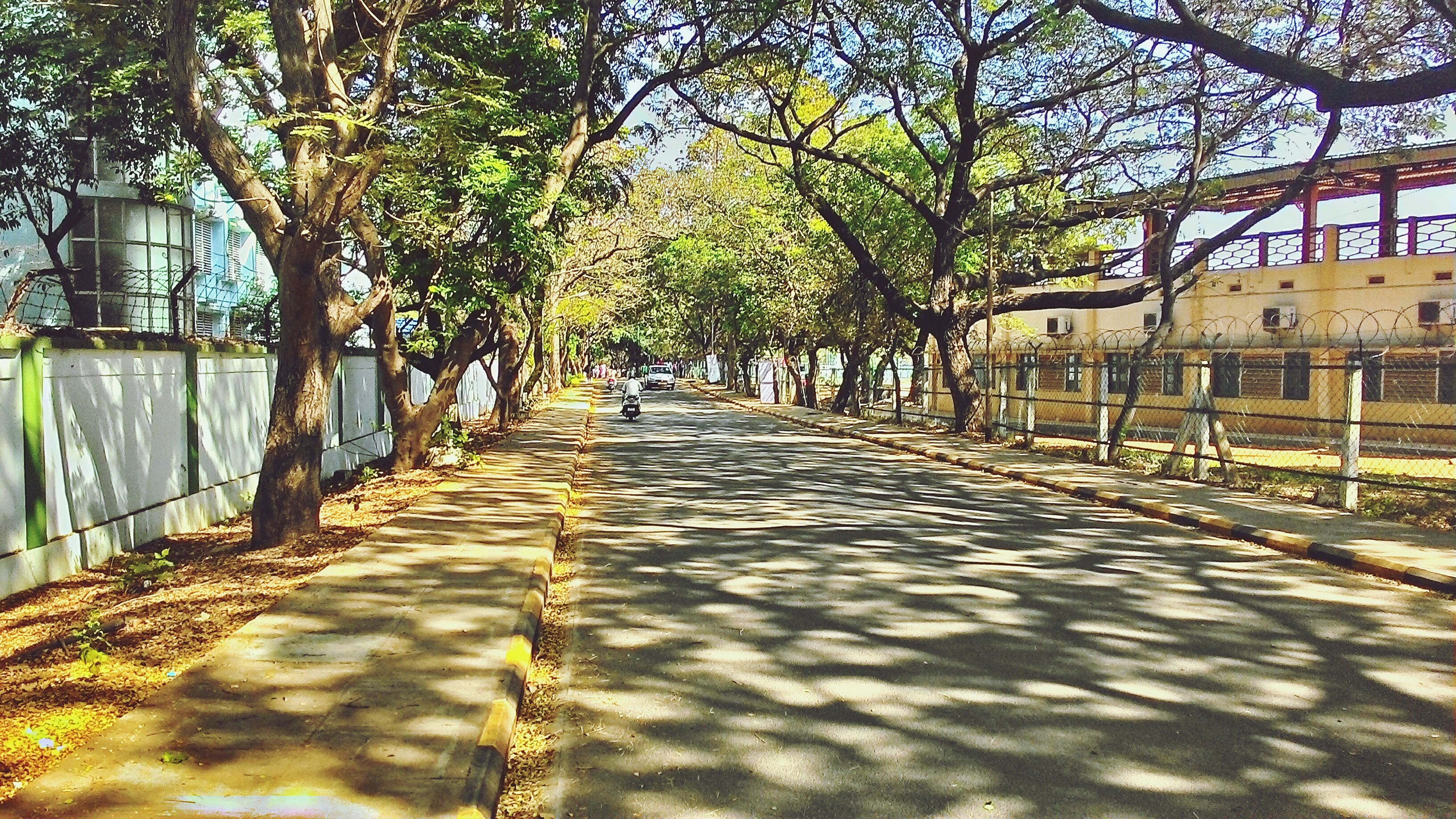 the way forward, tree, diminishing perspective, vanishing point, transportation, footpath, street, built structure, walkway, long, narrow, treelined, pathway, architecture, building exterior, branch, empty, road, sunlight, growth