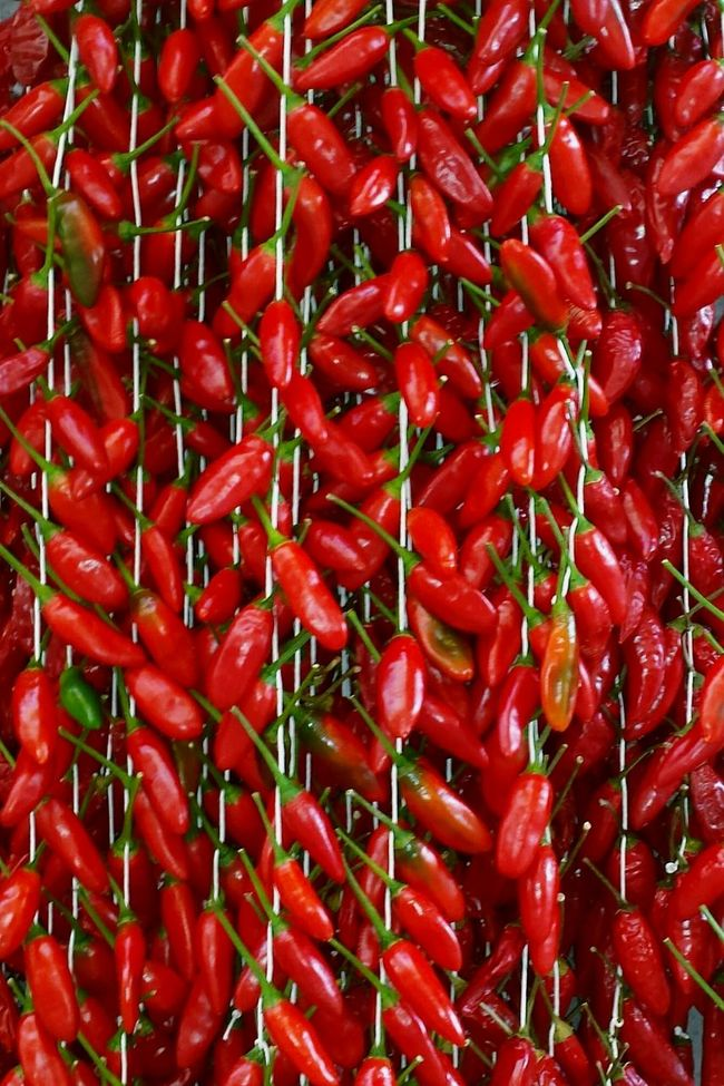 Chilis Red Red Red  Color Palette Colorful Colour Of Life Vegetables Spices Spice Up Your Life Spicy Food Spice It Up Chili Peppers Chili Milli Chilies Chilies On A String Ladyphotographerofthemonth Showcase August Just One Color Chili Red