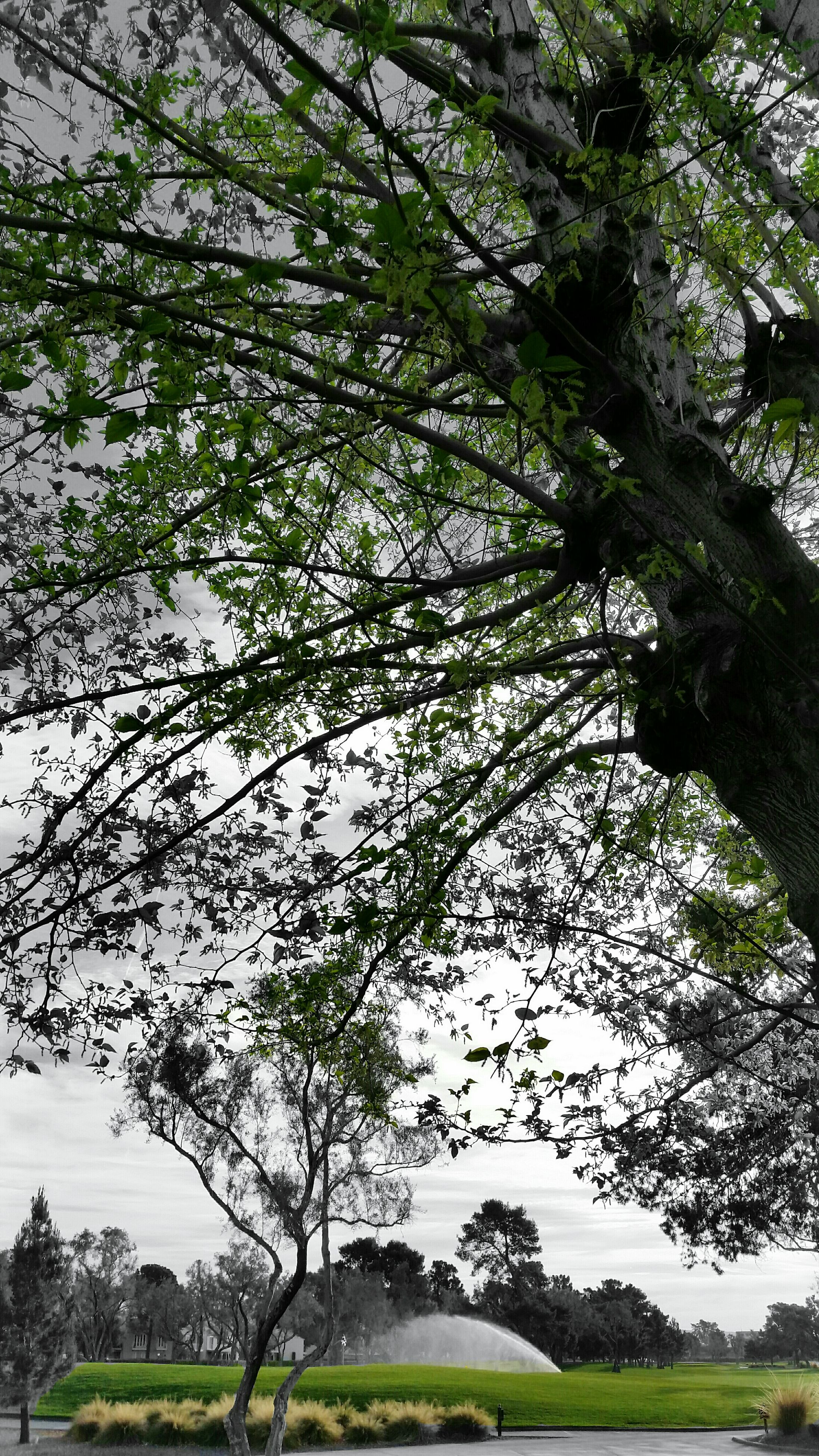 tree, nature, growth, branch, no people, low angle view, outdoors, beauty in nature, day, sky, grass, close-up