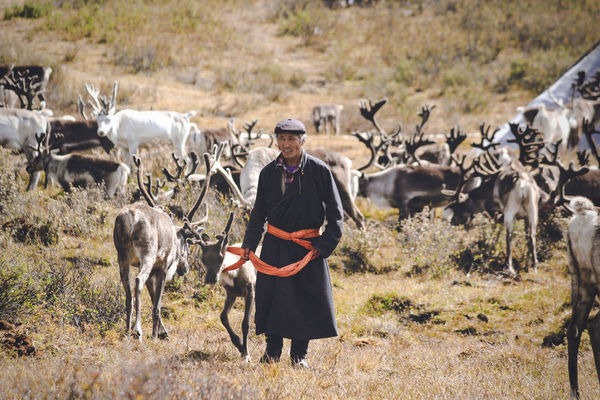 Mongolia Mongolia Raindeer Adventure Field Livestock Mammal Nature Occupation Outdoors Raindeer Herders Real People Taiga