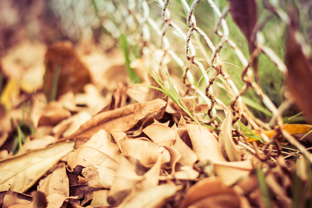 Leaves Autumn Beautiful Light Beauty In Nature Close-up Day Dry Fall Fence Field Fragility Growth Leaf Leaves Light Lovely Weather Nature No People Outdoors Plant