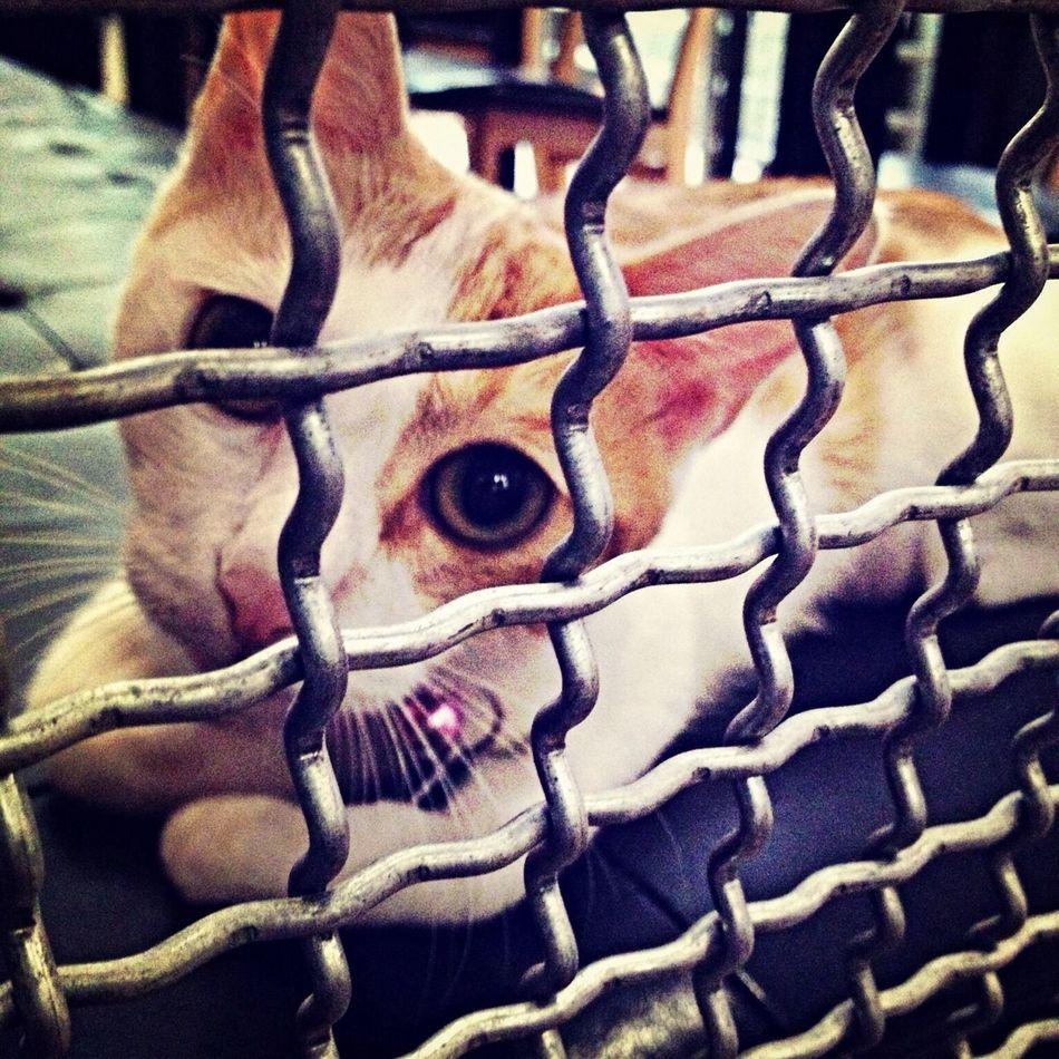 Kaka kitten