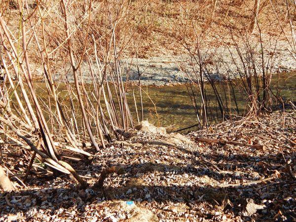 March2015 Nikon L830 Nature Into The Nature Trail