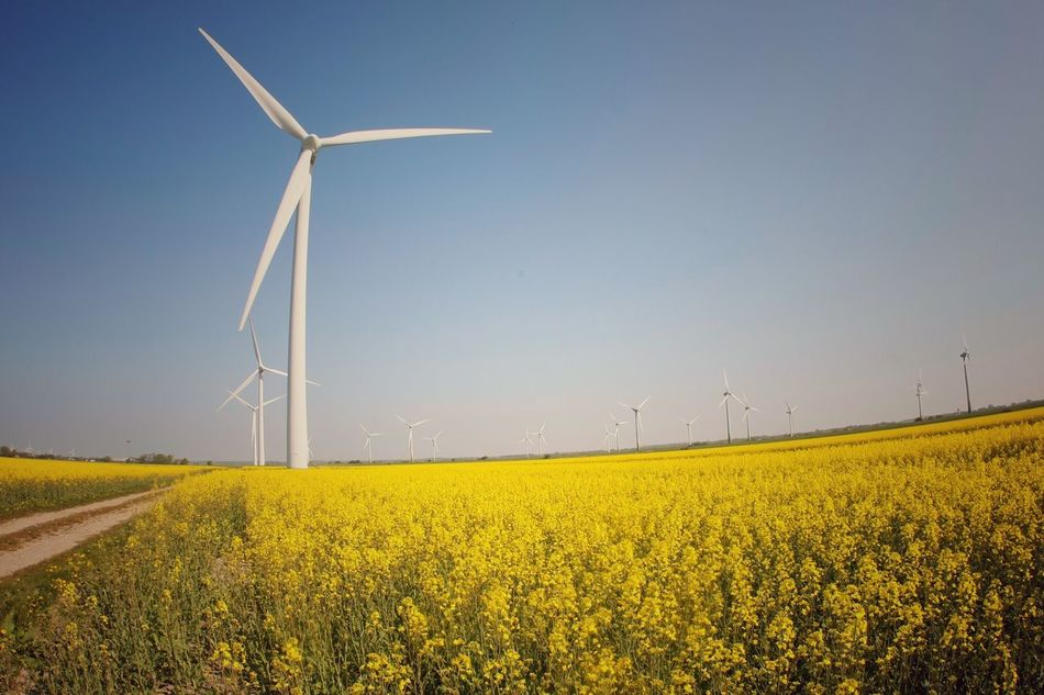 Wind Power Wind Turbine Alternative Energy Fuel And Power Generation Environmental Conservation Renewable Energy Weltblick Windmill Rural Scene Windmill Field Industrial Windmill Day Agriculture Nature Outdoors Yellow No People Landscape Scenics Sky Technology