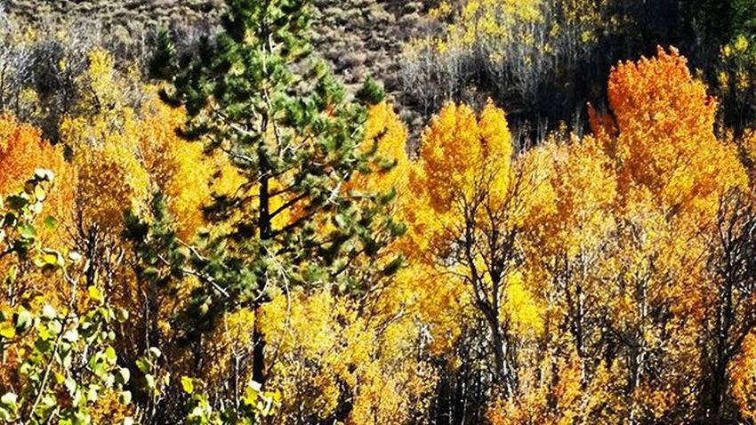 Nevada Nevadadesert Desertlove Explorenevada Realnevada Prettygoodtoday Todaywasagoodday Fallisintheair