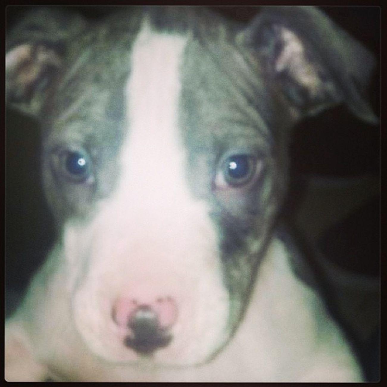 Day10 Pets Adaylate MissMyBabyJay <3