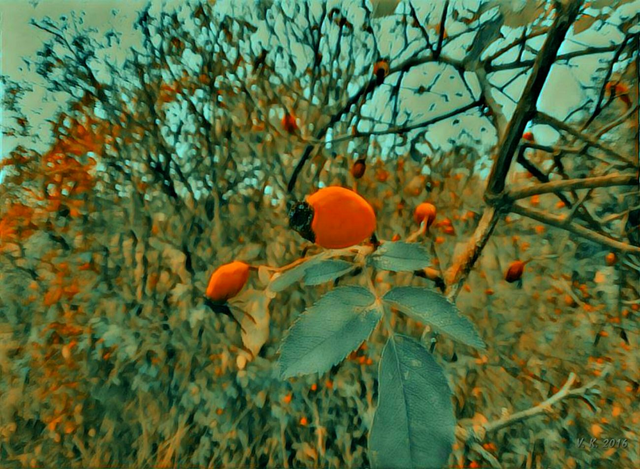 Colorful autumn Growth Nature Orange Color Tree Beauty In Nature Leaf No People Outdoors Fragility Day Close-up Freshness Rose Hips
