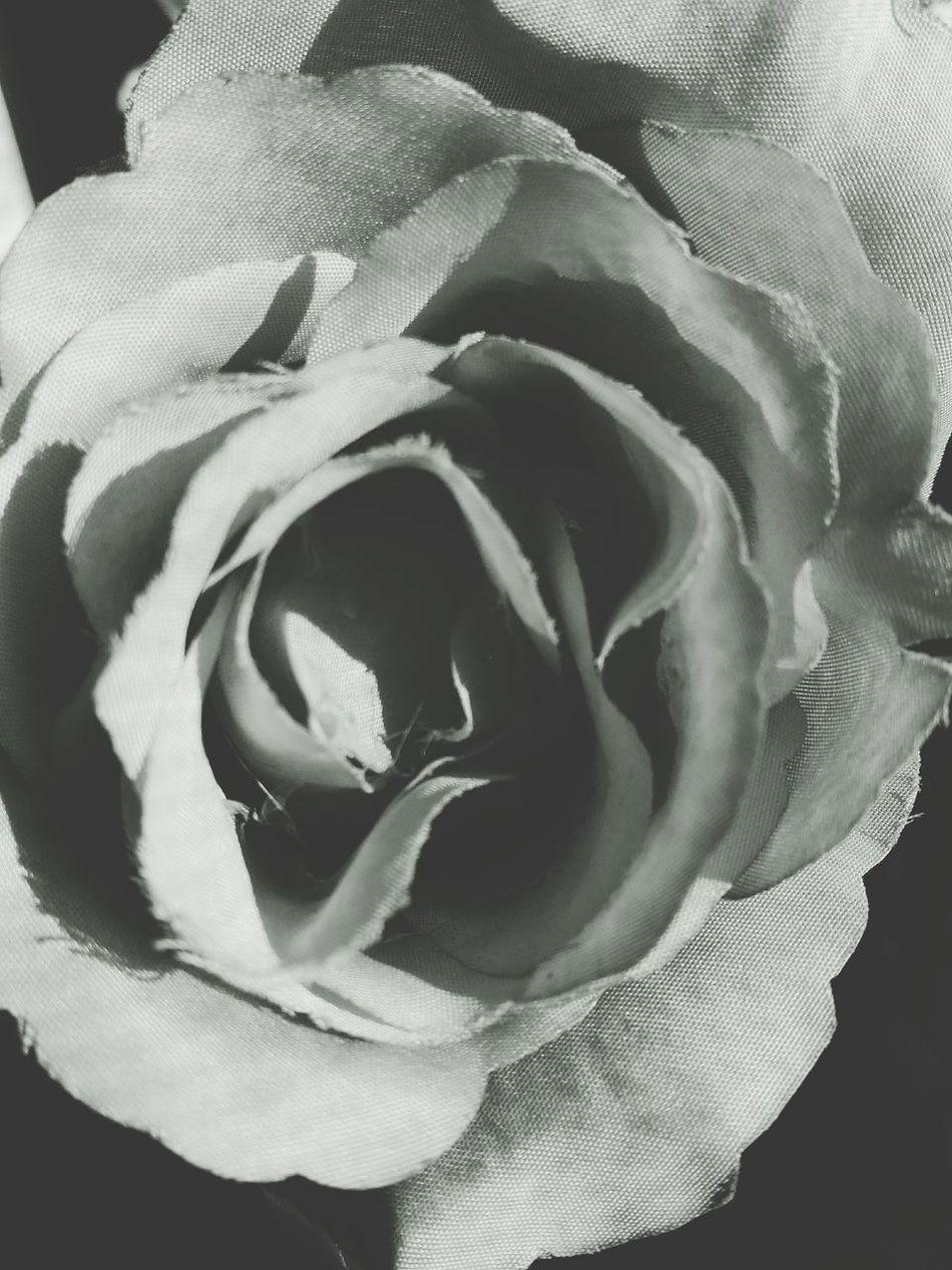 Rose♥ Flower Black & White Photo