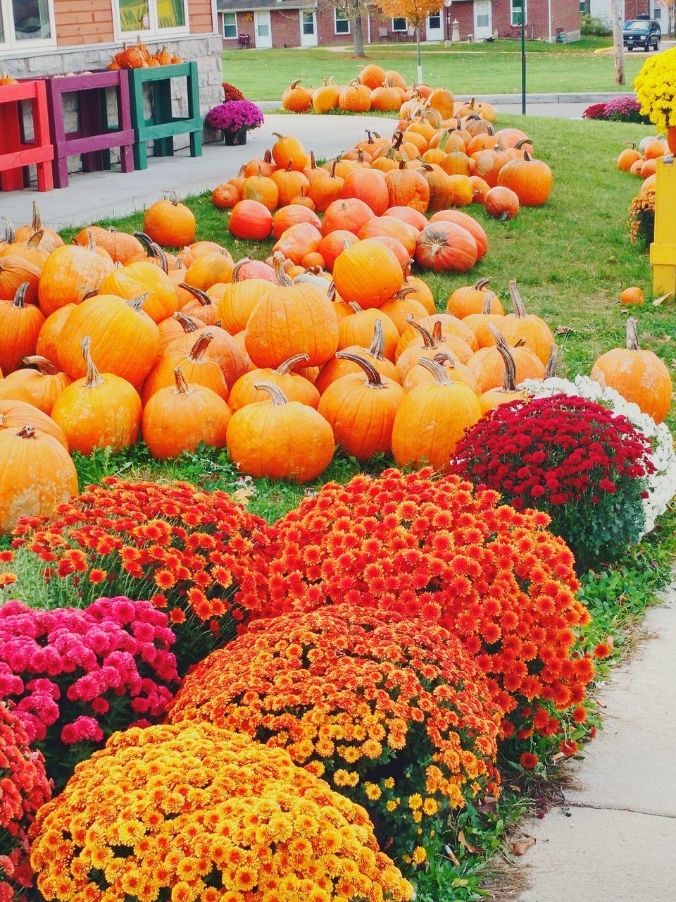 orange color, outdoors, freshness, for sale, day, abundance, market, retail, no people, pumpkin, flower, nature, food