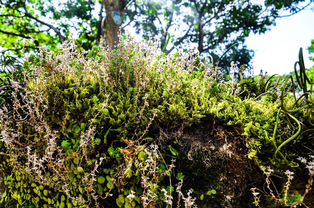 Growth Nature Tree Plant Green Color Beauty In Nature Outdoors No People Day Low Angle View Tranquility Close-up Freshness Nikon D7000 Forest