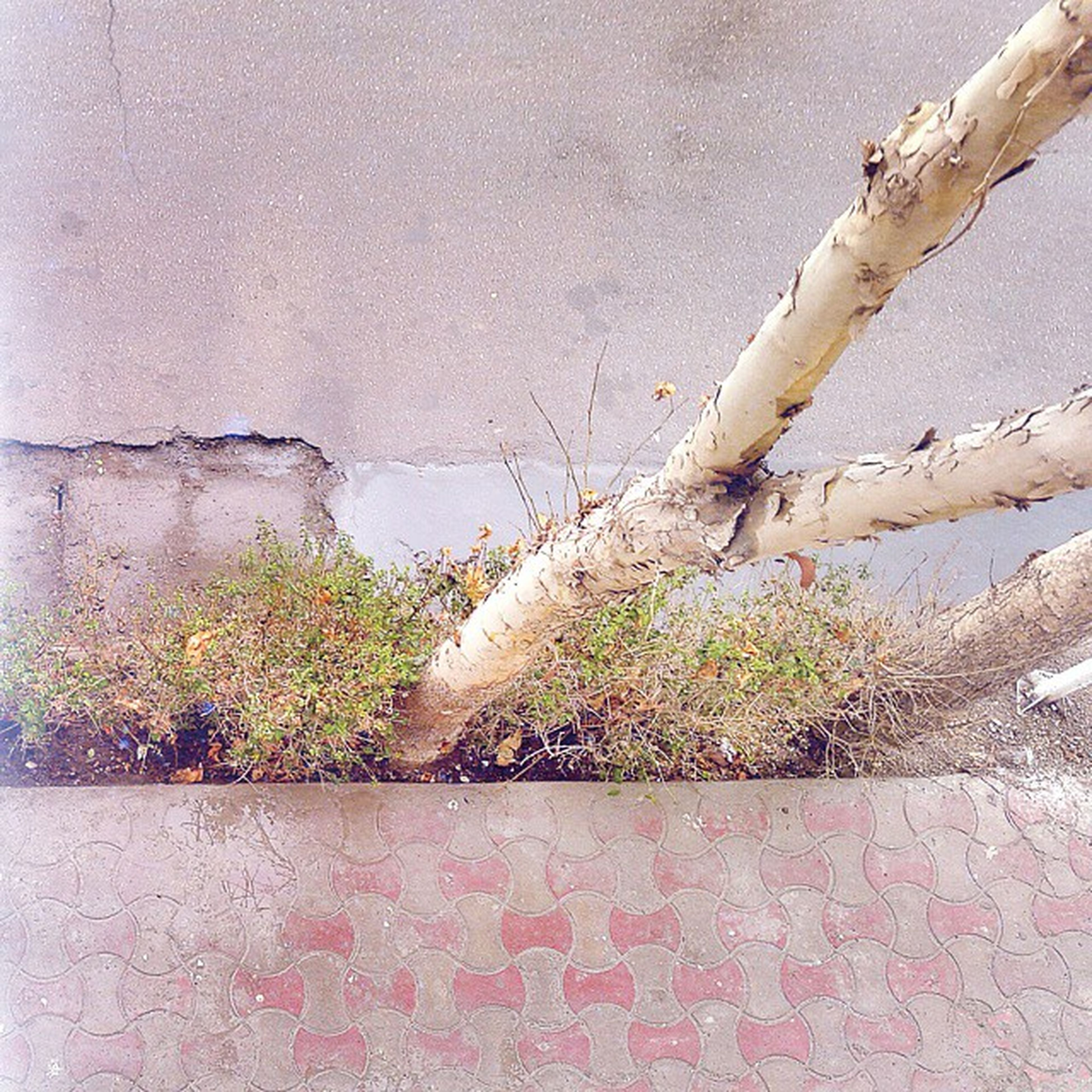 plant, growth, wall - building feature, growing, nature, water, wall, built structure, day, no people, outdoors, architecture, building exterior, branch, green color, tranquility, tree, beauty in nature, close-up, leaf