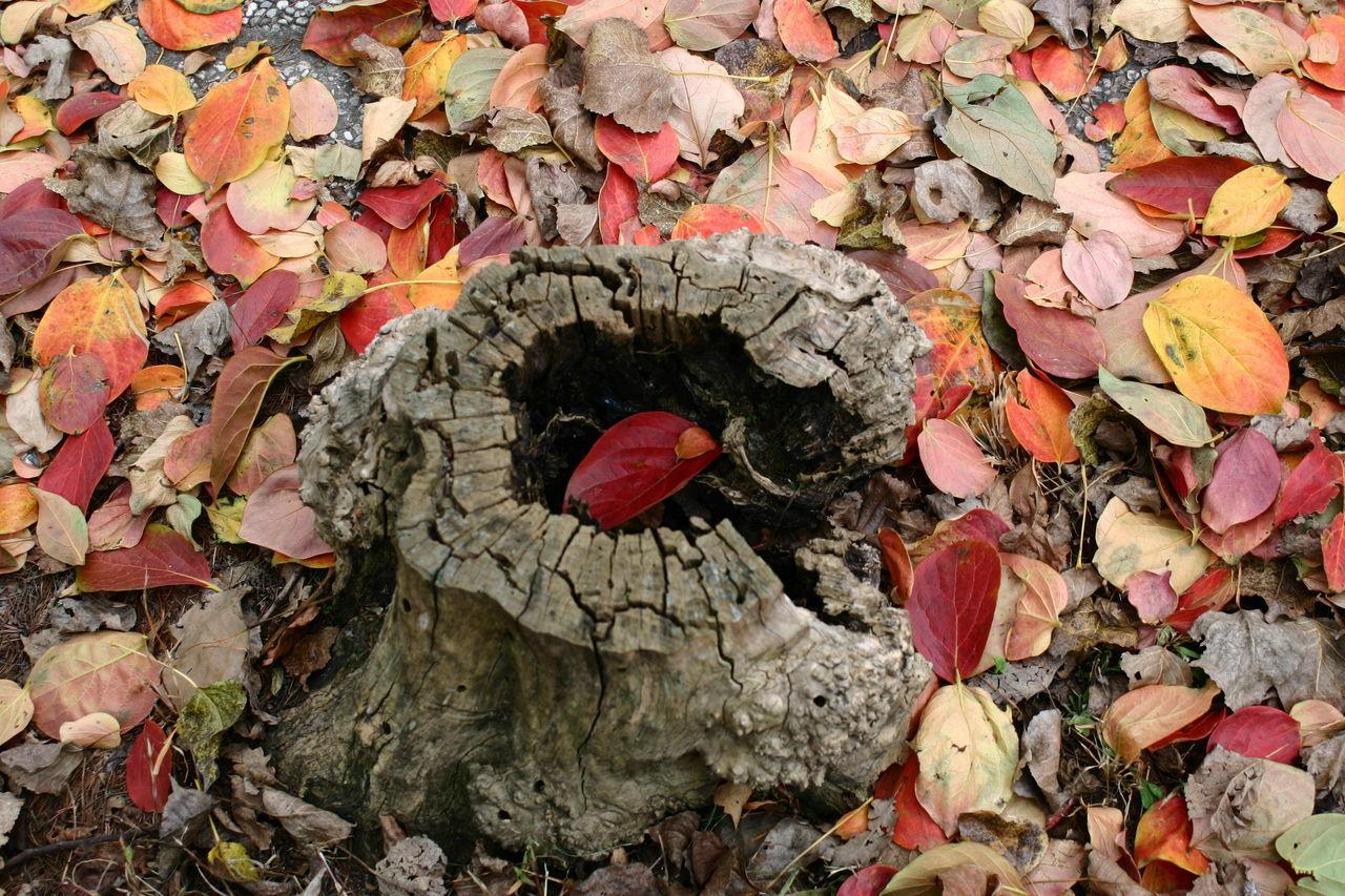 Senzafiltro Natural Naturale Nofilters Natura Autunno  Fall Tronco Buco Foglie Leaves