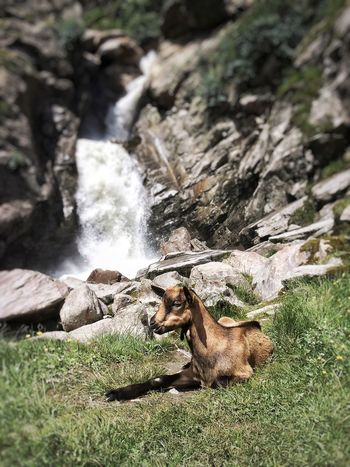 Animal Themes Mammal Motion Rock - Object Nature Day Outdoors One Animal Dog Grass Domestic Animals Waterfall Pets Water