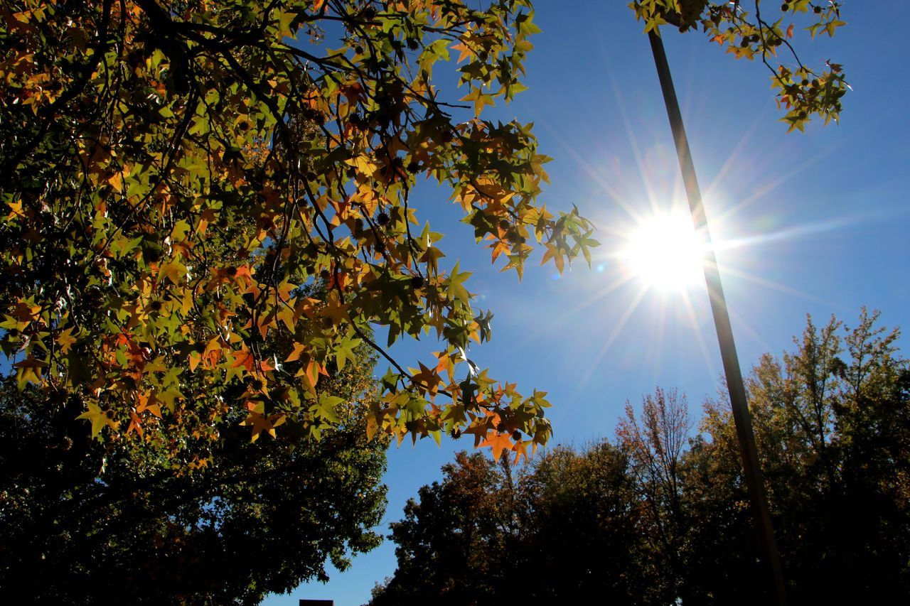 sun, sunbeam, tree, sunlight, lens flare, nature, beauty in nature, bright, leaf, no people, shining, growth, sunny, branch, tranquility, outdoors, day, low angle view, scenics, autumn, sky