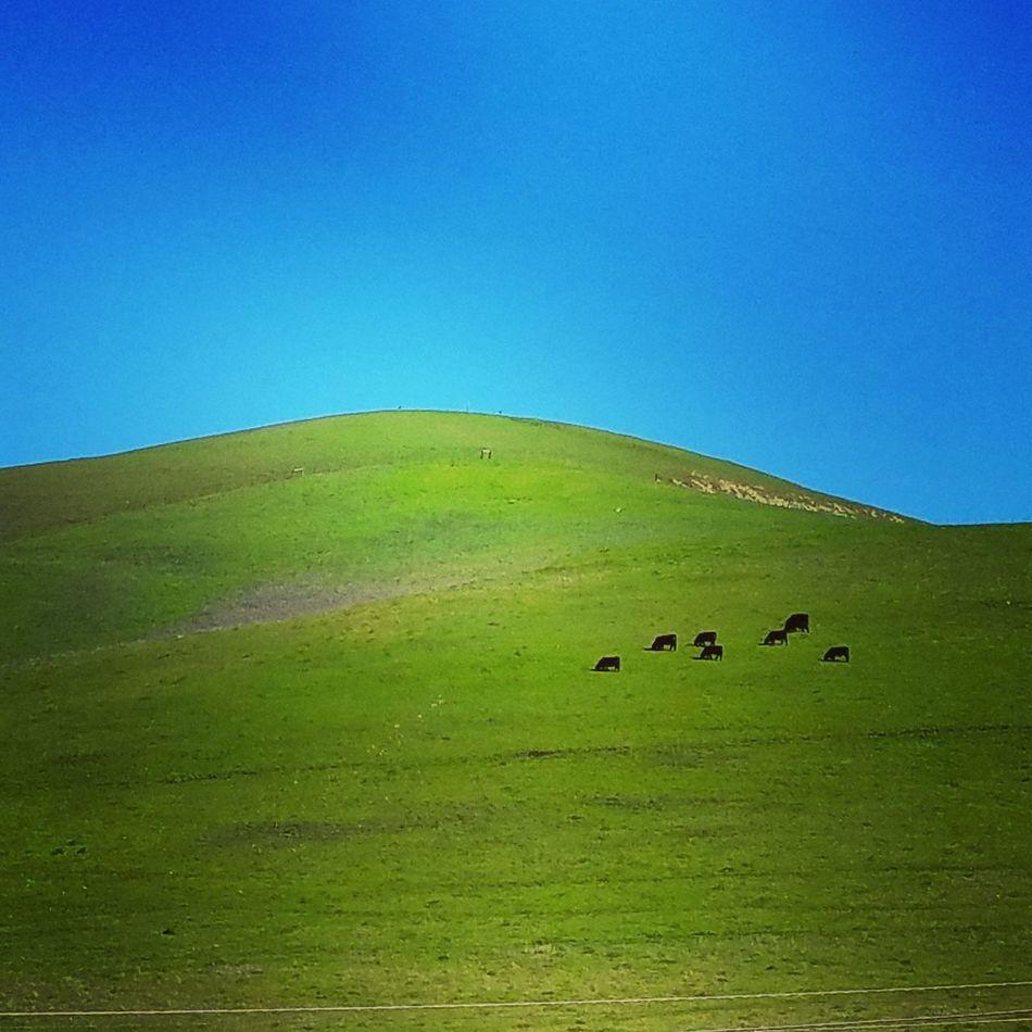Solitude. Blue Green Color Clear Sky Landscape Beauty In Nature Outdoors California California Coast No People Gaviotacoast