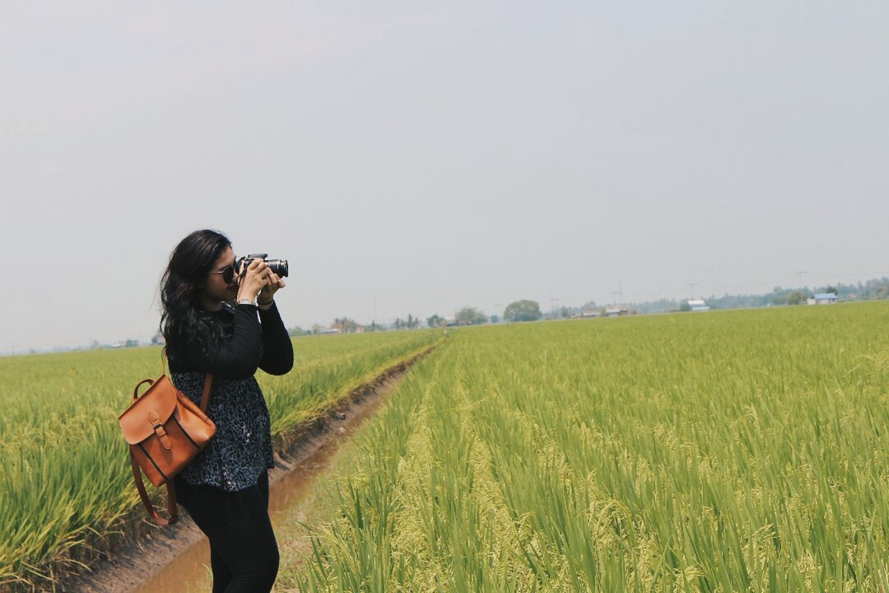Live For The Story Paddy Field Agriculture Crop  Farm Rural Scene Outdoors Photographing Day EyeEm EyeEm Gallery Malaysia Sekinchan, Malaysia