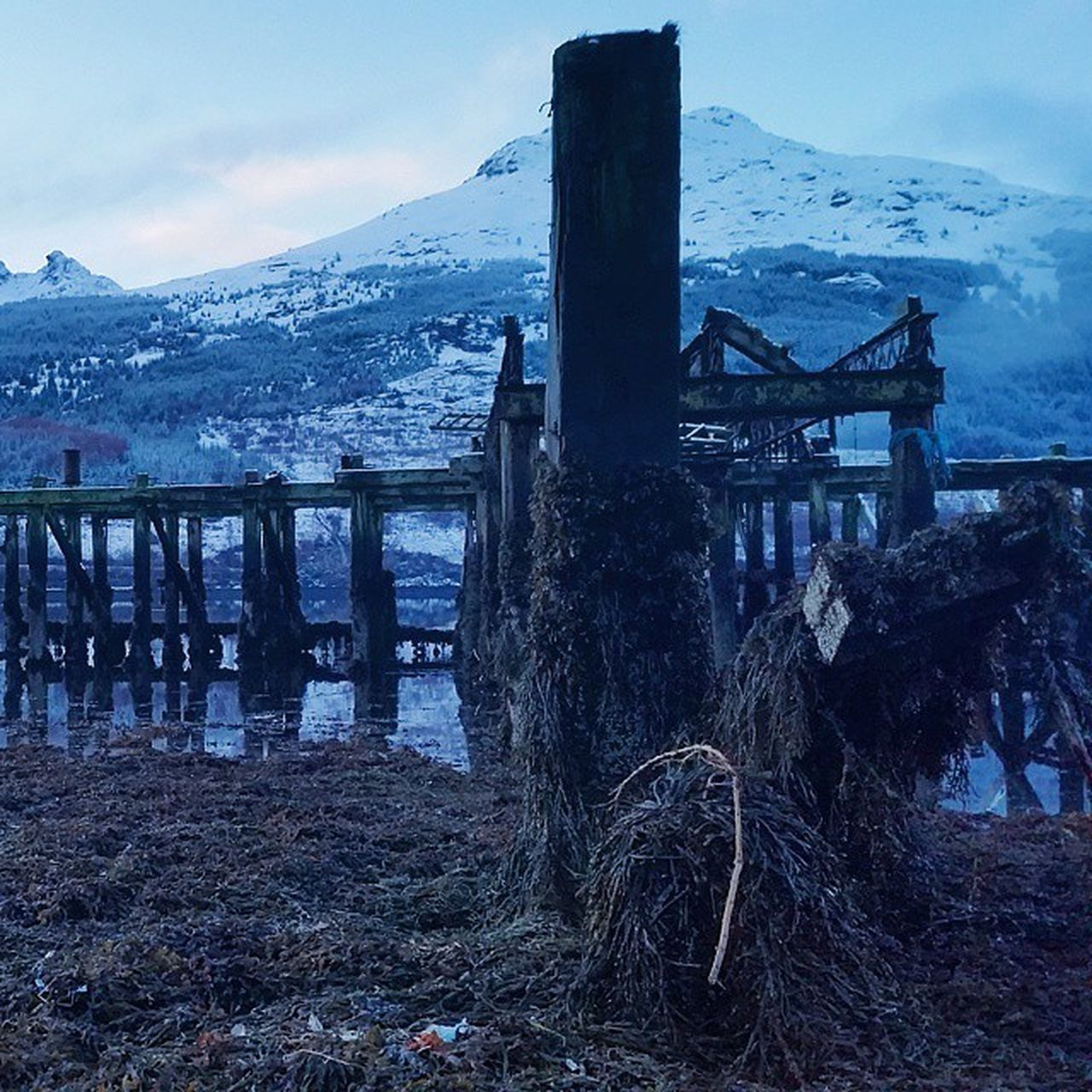 Scotland LochLong Argyll Forest Forestholidays Loch  Wood Seaweed Winterscene Winterpictures Winter Travel Travels Holiday Holidays Scenic Scenicview Tourist