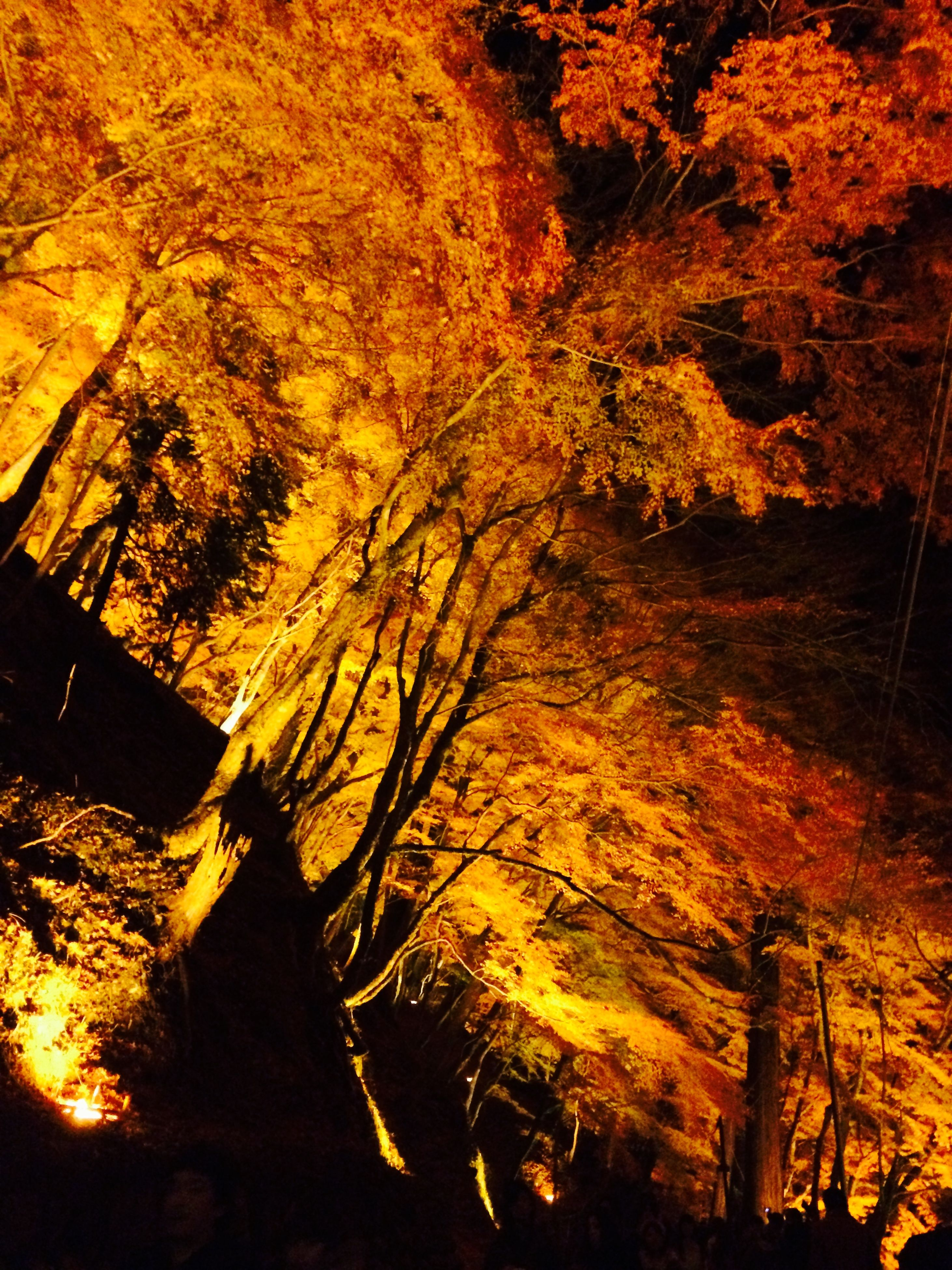 orange color, sunset, tree, yellow, branch, nature, sunlight, low angle view, outdoors, autumn, silhouette, beauty in nature, no people, tranquility, shadow, built structure, growth, change, scenics, tree trunk