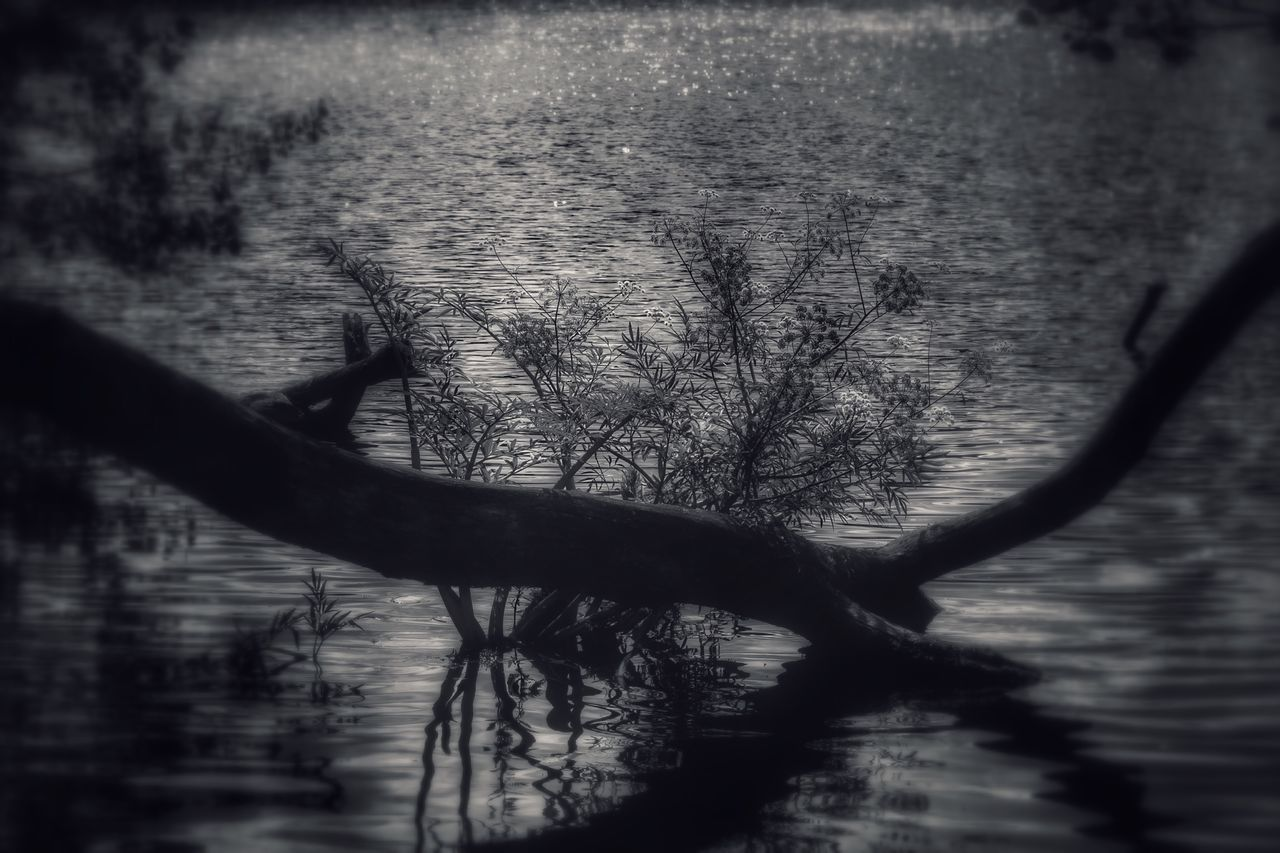 Water Reflection Nature Outdoors Tree Lake No People Day Beauty In Nature Branch Horizon Over Water EyeEmNewHere TheWeekOnEyeEM Canonphotography Canon_photos Canon 6D Sweden Reflection_collection Water_collection Silhouette