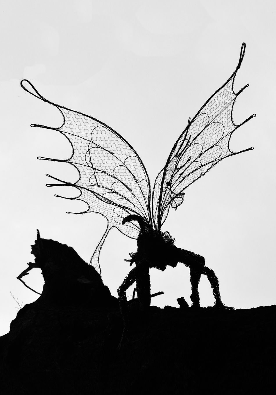 Beauty In Nature Black And White Close-up Fairy Fairy Wings Filligre Focus On Foreground Low Angle View Nature No People Outdoors Silhouette Simplicity Sky Tranquility Tree Fairy Twig Vignette Wings Wood Sprite