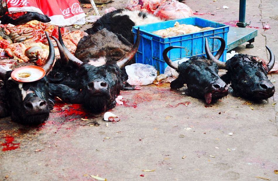 Meat Market in China Animal Themes Outdoors Kangding Sichuan Oxen Dead Dead Animals Meat Market Meat! Meat! Meat!