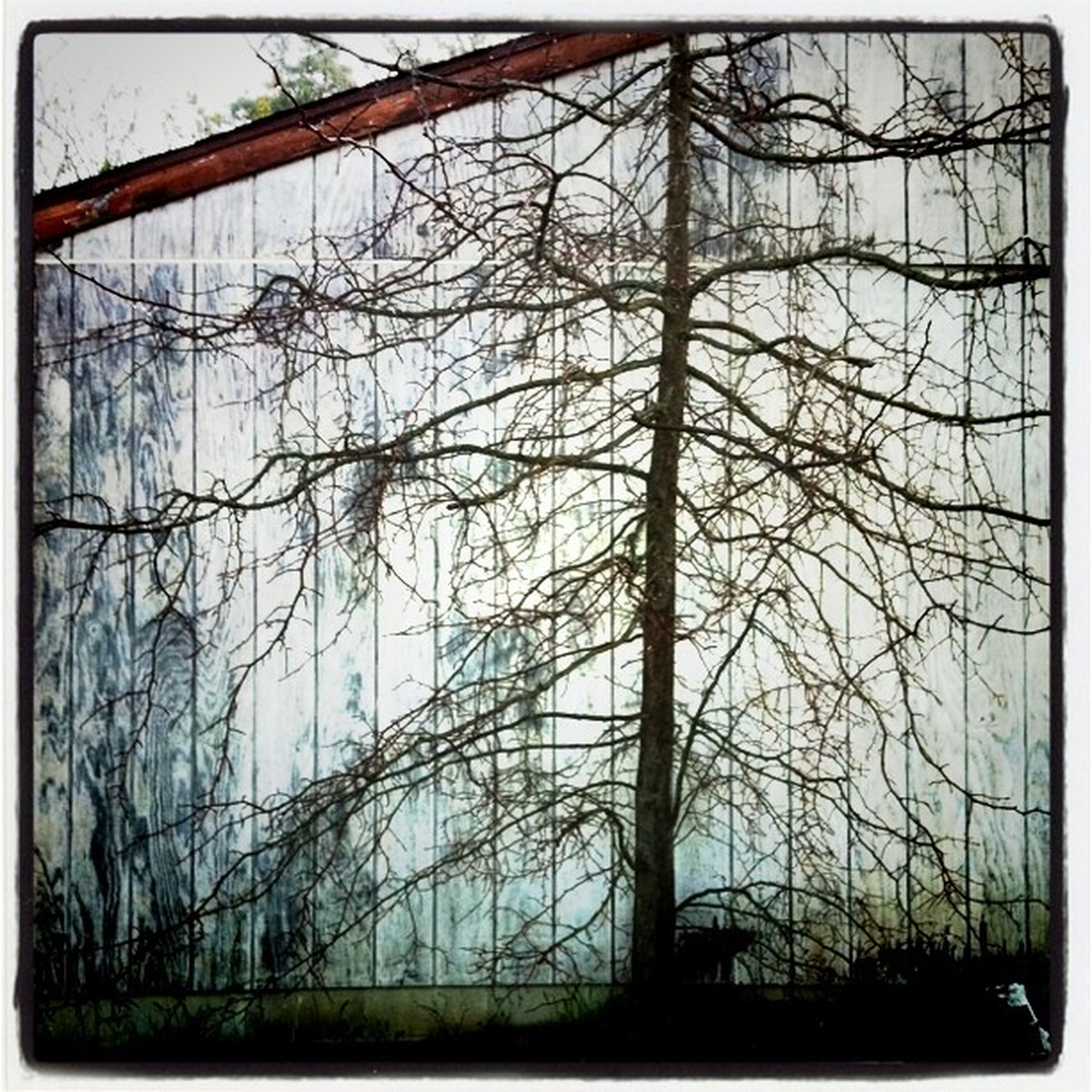transfer print, auto post production filter, tree, low angle view, bare tree, branch, silhouette, indoors, sky, clear sky, day, metal, window, no people, glass - material, built structure, nature, frame, close-up