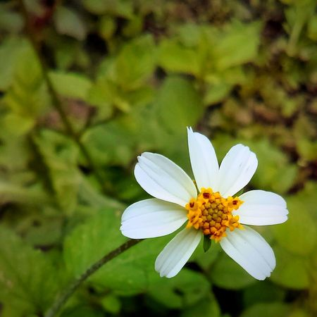 Flower Fragility Plant Flower Head Close-up Nature Outdoors Day Beauty In Nature Summer Freshness No People