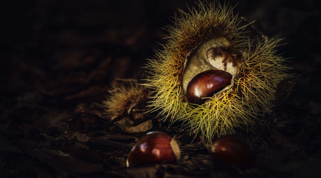 Close-up Selective Focus Chestnut - Food Nut - Food Nature Spiky Sharp Thorn Chestnut Shell Chestnuts, Tranquil Scene Focus On Foreground Natural Condition Fallen Single Object Season  Autumn Collection Autumn Fall Beauty