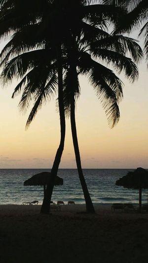 The Essence Of Summer Palm Trees Shillouette Beach Beachphotography Sand Calm Ocean Beauty