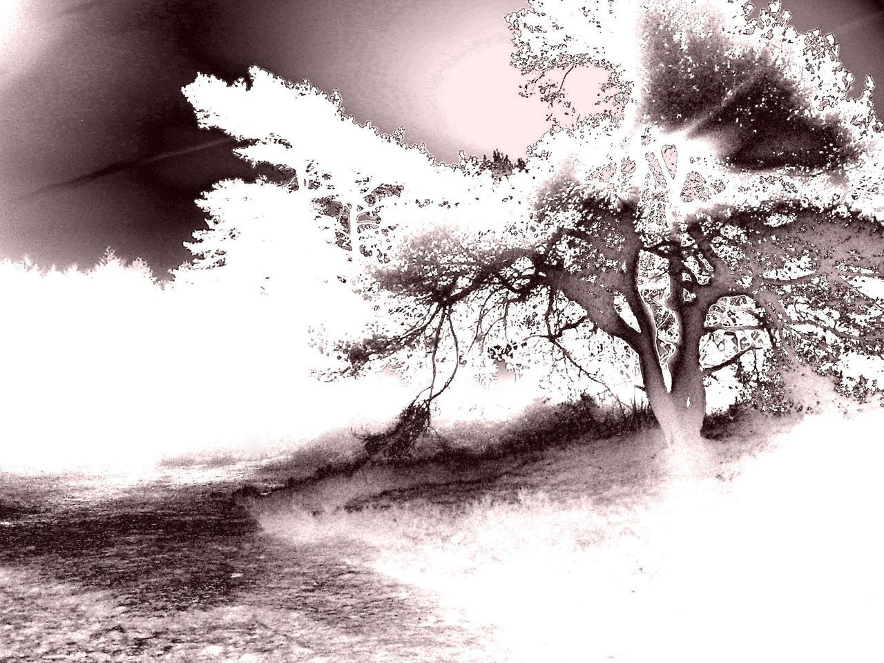 Tree Special Effects Solarized Artistic Photography Monochrome Mysterious Mist Mysterious Mystic High Contrast
