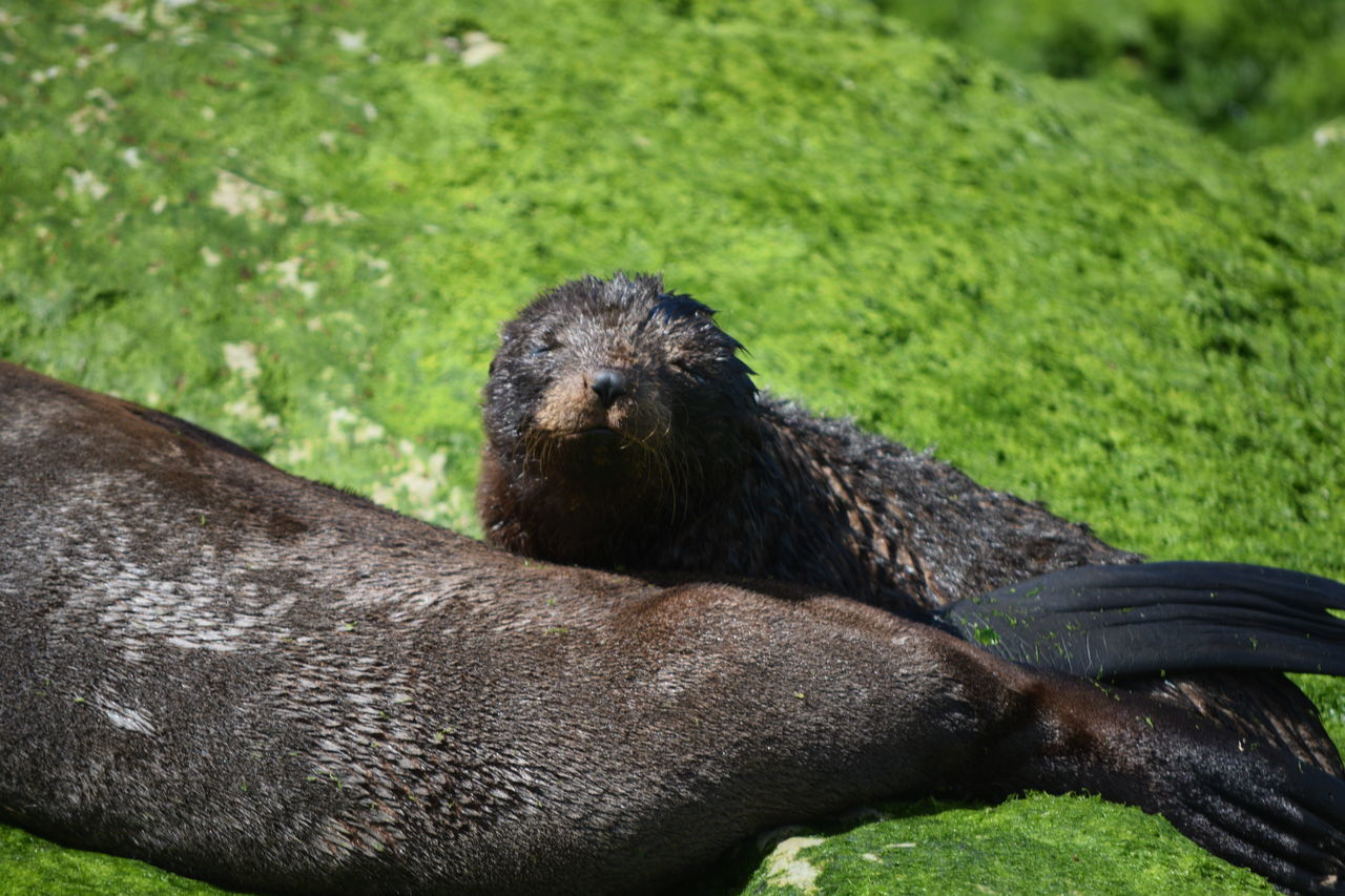 Animal Themes Animals In The Wild Water Close-up No People Outdoors One Animal Mammal Animal Wildlife Nature Day Grass Baby Seal