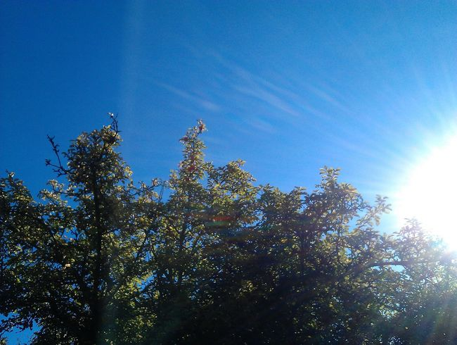 Yepp! It's going to be a wonderful day! The sunny sun and the blue sky! Thank you Taking Photos This Day Feeling The Sun Smelling The Color Green