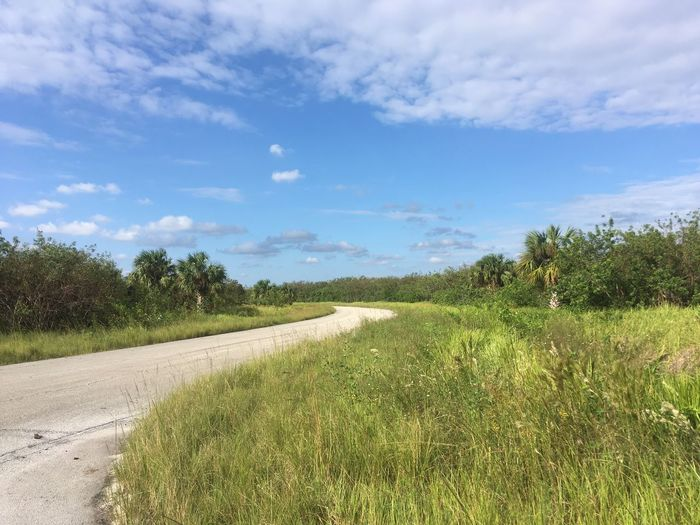 Grass Road Sky Tranquil Scene Landscape Nature Tree Growth The Way Forward Day Tranquility Scenics Field No People Outdoors Beauty In Nature Florida Life Florida
