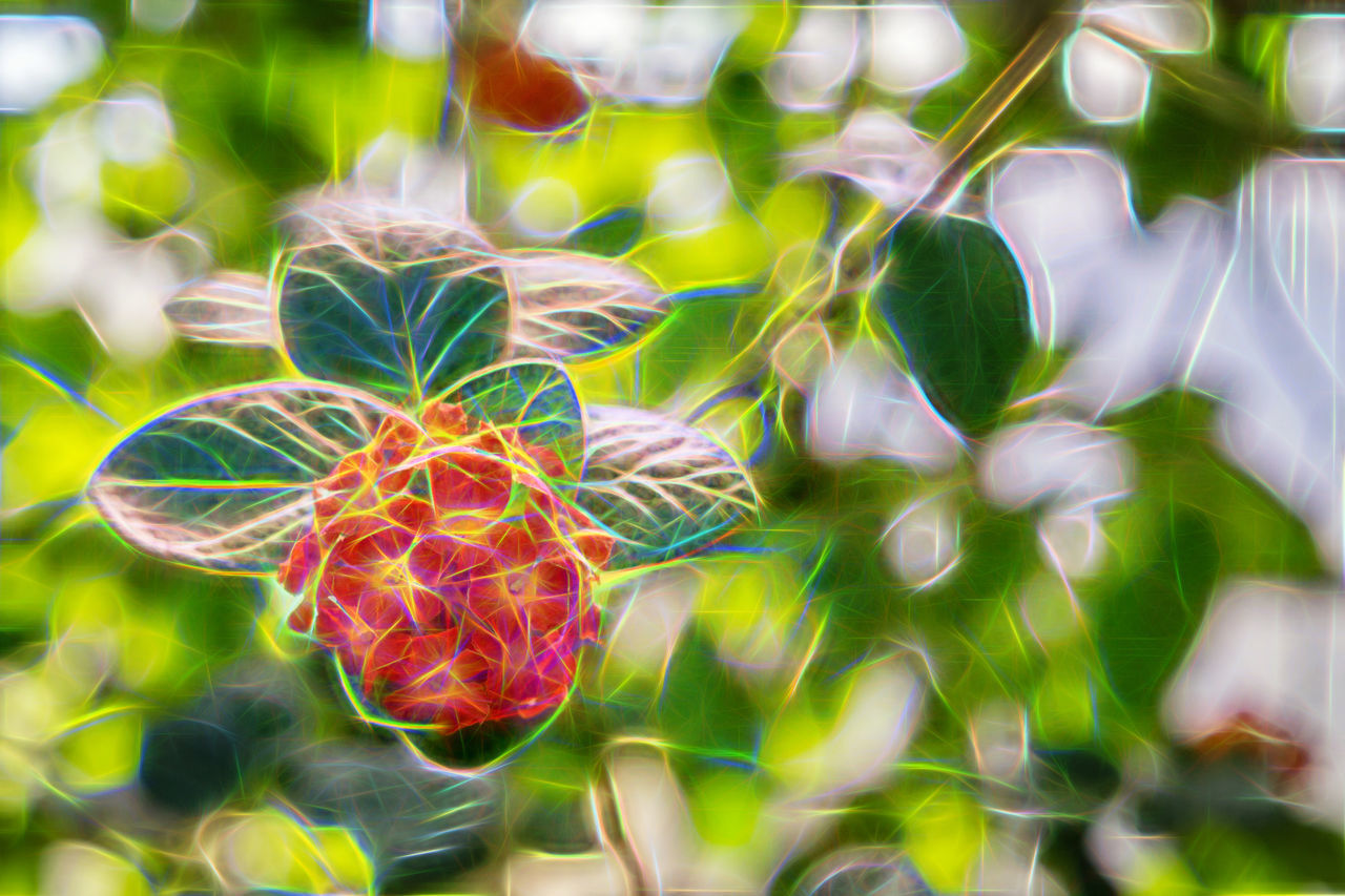 Beauty In Nature Close-up Day Fragility Freshness Green Color Growth Leaf Nature No People Outdoors Plant Topaz Glow