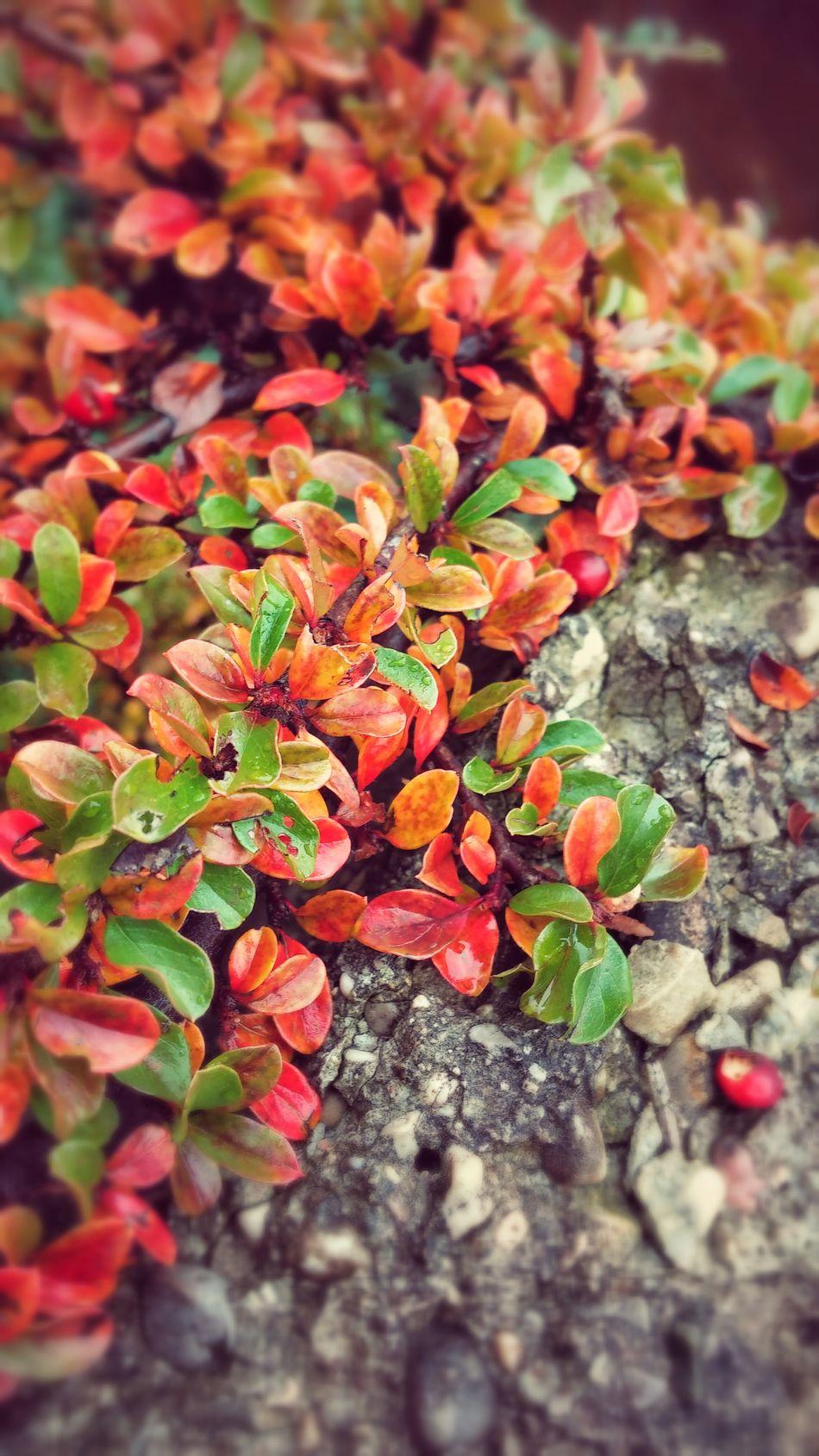 It seems like it was still Autumn ! Warm Light Warmcolours Leaf 🍂 Want Winter Back