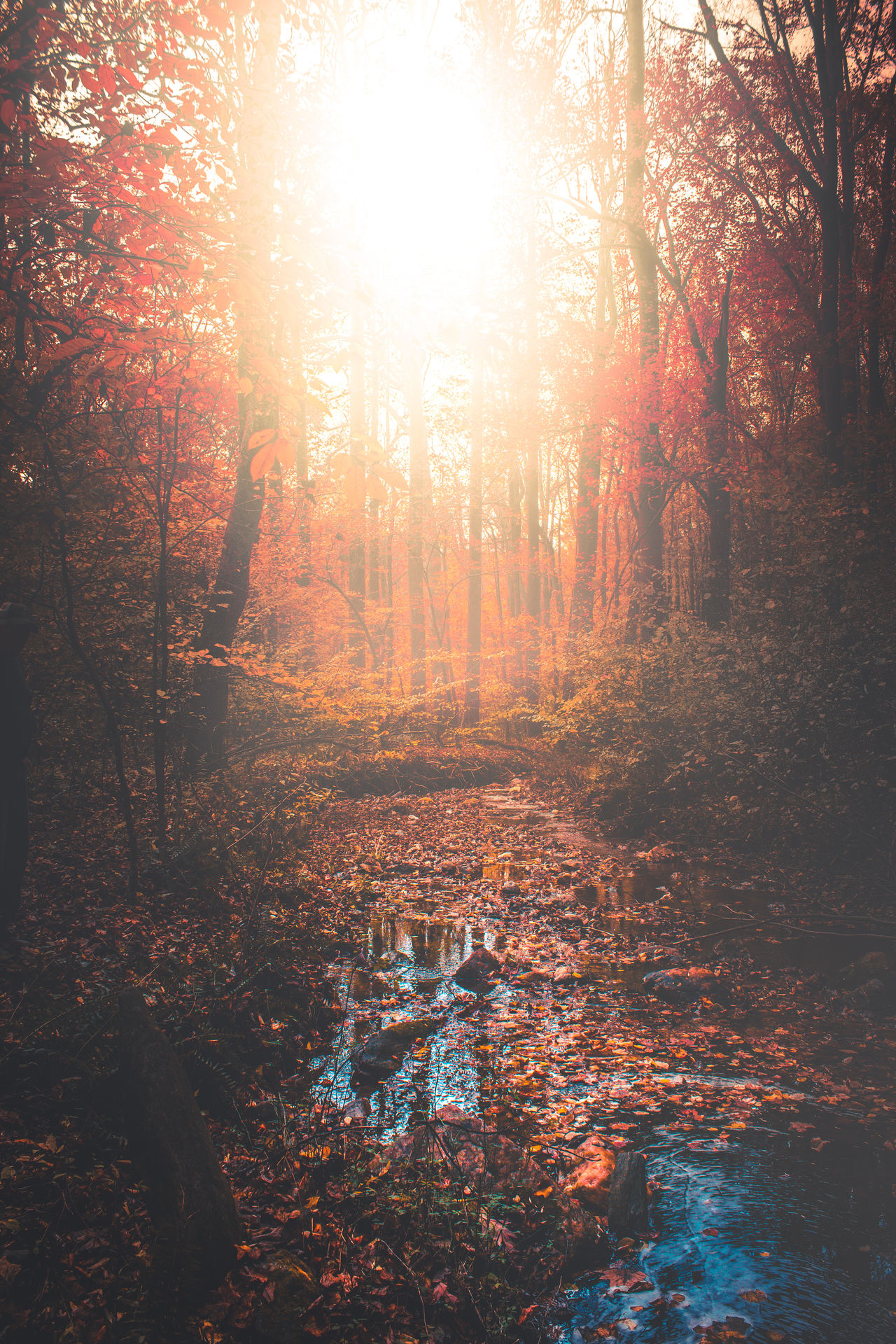 Sunset Wet Nature Full Frame No People Sky Backgrounds Beauty In Nature Water Tree Day Autumn New Eyeemphotography Trees Forest EyeEmBestEdits Eye4photography  Colors Outdoors Tree Beauty Exploring Eye4photography  EyeEm Gallery
