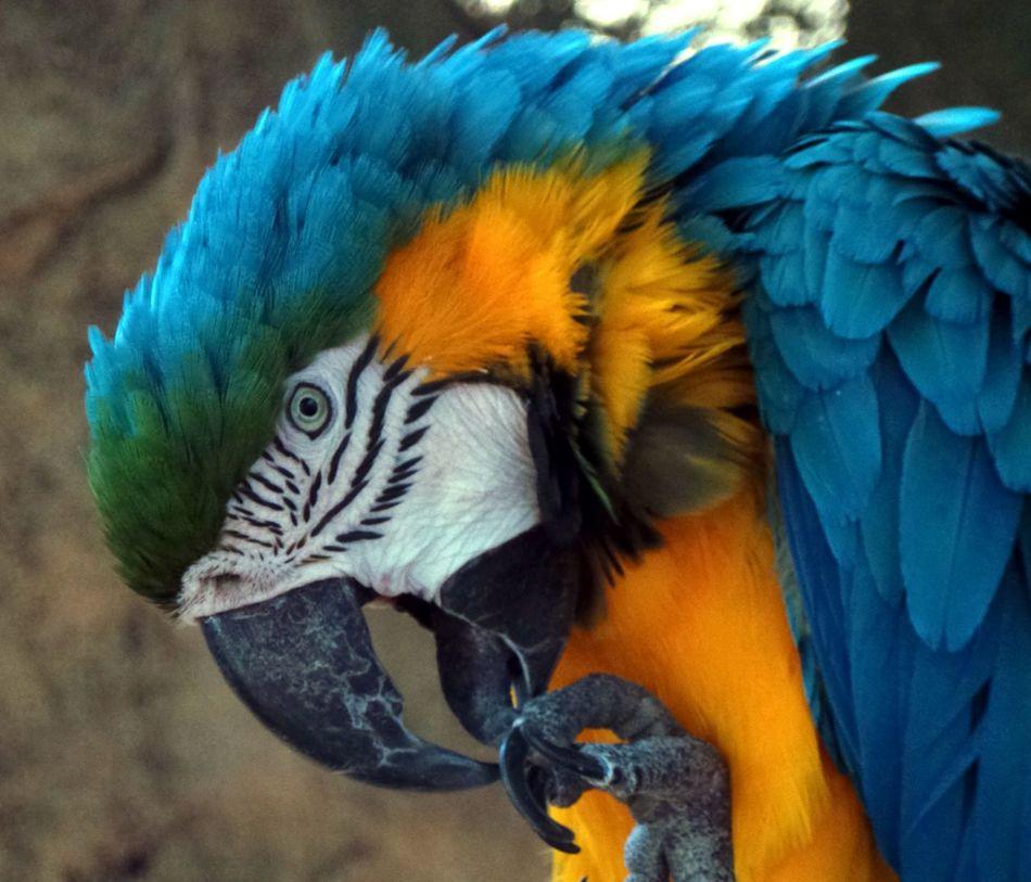 Beautiful stock photos of parrot, Animal Body Part, Animal Head, Animal Themes, Beak